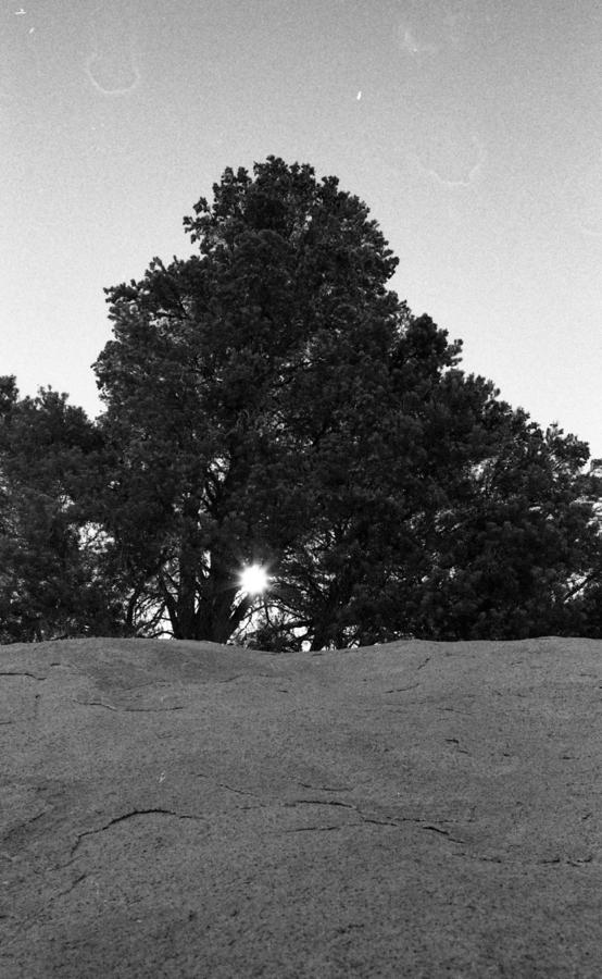 joshua-tree009-2