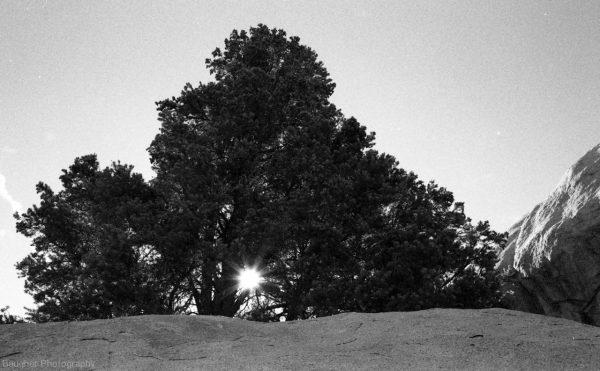joshua-tree001